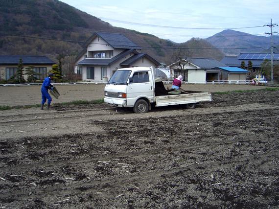 taihimaki1.jpg