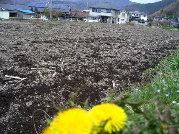http://midorinodaichi.com/tanpopo.jpg